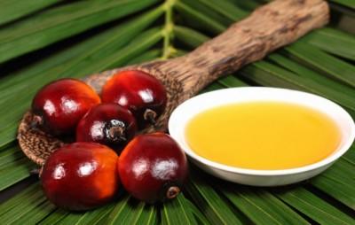 No all'olio di palma nell'alimentazione pubblica campana